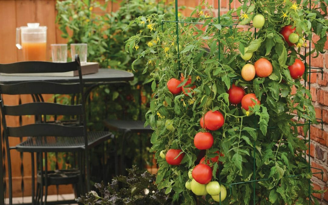 Big taste in half the space: Tips to garden great in small areas